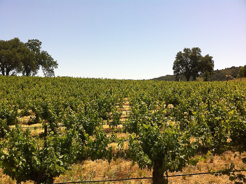 Shaking up Paso Robles